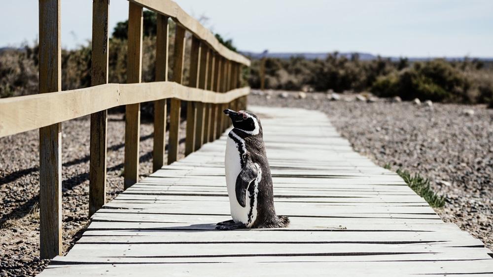 pinguin-und-ziele